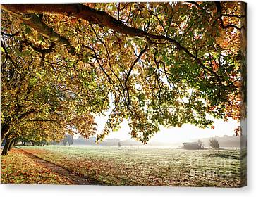 Overhang Canvas Print - Autumn Scene With Overhanging Trees by Simon Bratt Photography LRPS