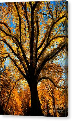 Autumn Season 4 Canvas Print