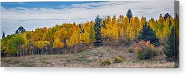 Autumn Season Aspen Panorama Scenic View Canvas Print