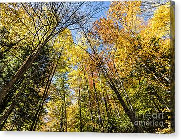 Canvas Print featuring the photograph Autumn Skies by Anthony Baatz