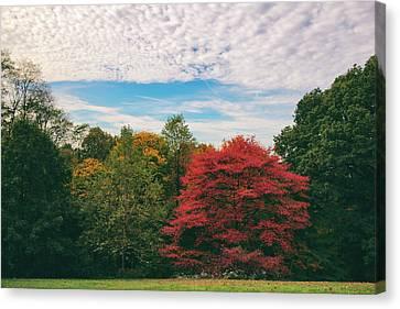 Autumn Skies Canvas Print by Jessica Jenney