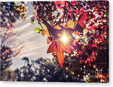 Canvas Print featuring the photograph Autumn Sky And Colorful Leaves In Fall Season With Sun Shine On  by Jingjits Photography