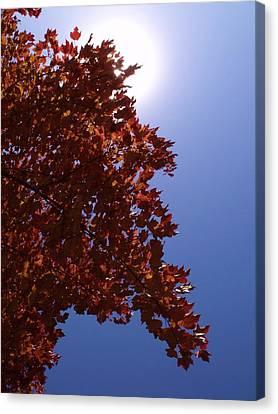 Autumn Sky I Canvas Print by Anna Villarreal Garbis