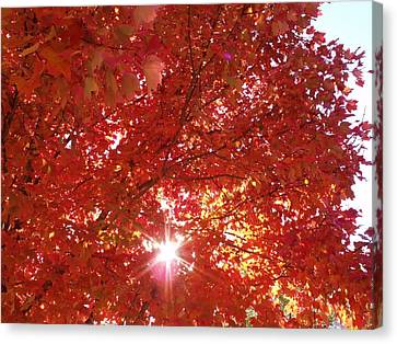Autumn Sky IIi Canvas Print by Anna Villarreal Garbis