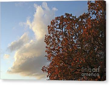 Autumn Sky Canvas Print by Jeannie Burleson