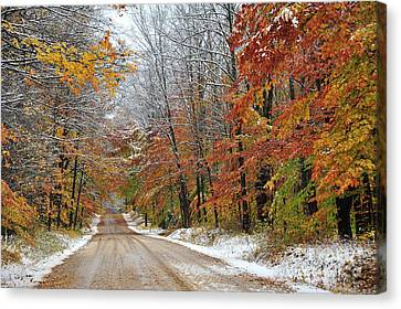 Autumn Snow In Manistee National Forest Canvas Print by Terri Gostola