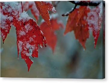 Autumn Snow Canvas Print by Venura Herath