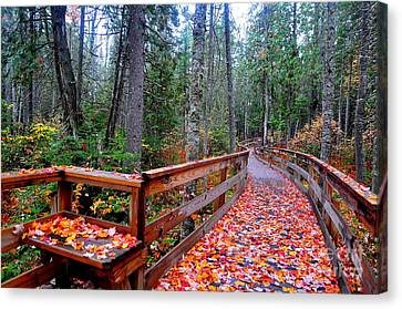 Canvas Print - Autumn Solitude  by Catherine Reusch Daley