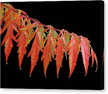Autumn Splash Canvas Print by Gill Billington
