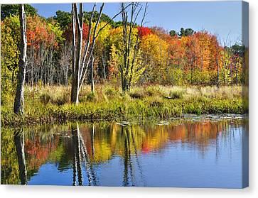 Autumn Splendor - Bolton Flats Canvas Print by Luke Moore