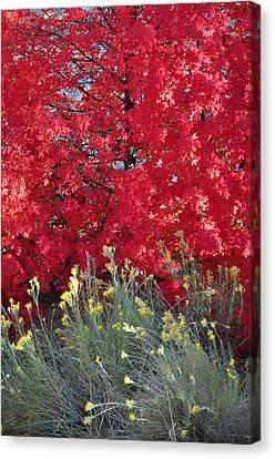 Autumn Splendor In Zion National Park Canvas Print by Bruce Gourley