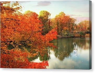 Swans... Canvas Print - Autumn Splendor by Jessica Jenney