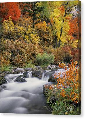 Autumn Splendor Canvas Print by Leland D Howard