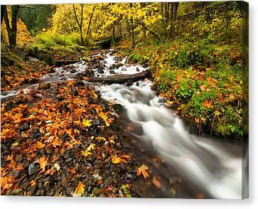 Autumn Split Canvas Print by Mike  Dawson
