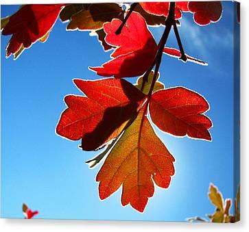 Fort Missoula Canvas Print - Autumn Sumac by Leah Grunzke