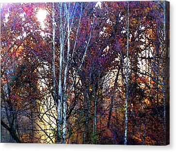 Autumn Sunlight Canvas Print by Jane Schnetlage