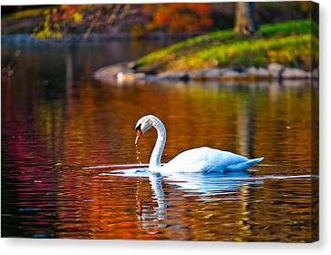 Autumn Swan Lake Canvas Print