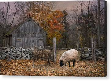 Autumn Sweater Canvas Print by Robin-Lee Vieira