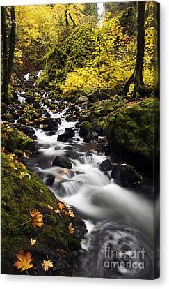 Autumn Swirl Canvas Print by Mike  Dawson