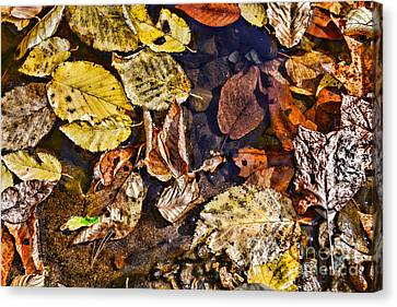 Autumn Leaf On Water Canvas Print - Autumn The Color Of Nature by Paul Ward