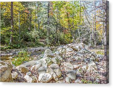 Autumn Trail Canvas Print by A New Focus Photography
