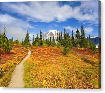 Autumn Trail Canvas Print by Mike  Dawson