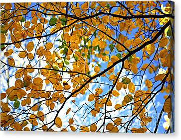 Autumn Tree Branches Canvas Print