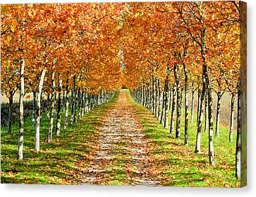 Urban Scenes Canvas Print - Autumn Tree by Julien Fourniol/Baloulumix