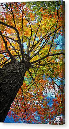 Autumn Tree Canvas Print by Peg Runyan