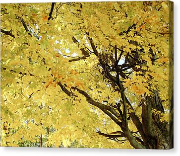 Canvas Print featuring the photograph Autumn Tree by Raymond Earley