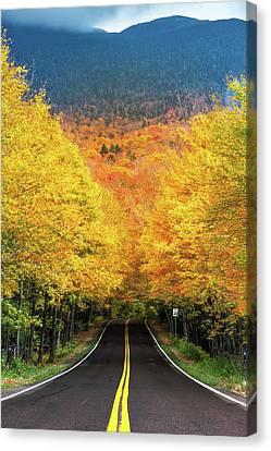 Autumn Tree Tunnel Canvas Print