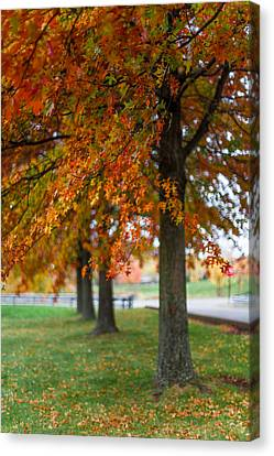 Canvas Print featuring the photograph Autumn Trees In A Row by April Reppucci