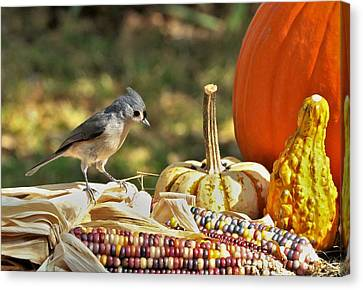 Canvas Print featuring the photograph Autumn Tufted Titmouse by Sheila Brown