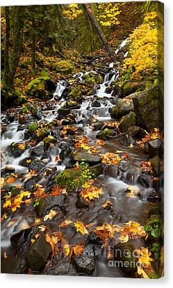 Autumn Tumbles Down Canvas Print by Mike  Dawson
