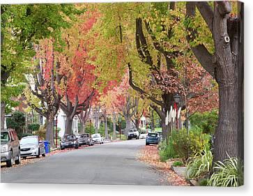 Autumn Urban Forest  Canvas Print by Sheila Fitzgerald