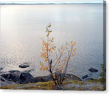 Canvas Print featuring the photograph Autumn View 3 by Sami Tiainen