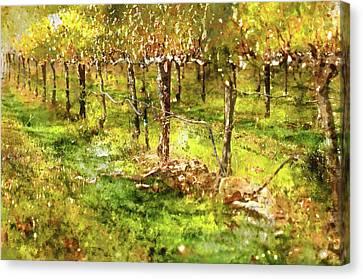 Autumn Vineyard Canvas Print by Brandon Bourdages