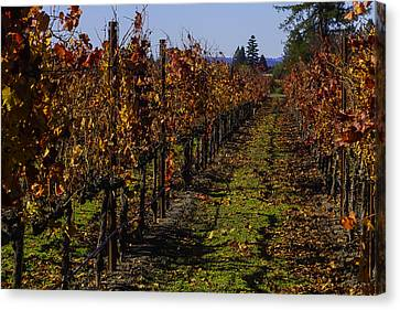 Autumn Vineyard Colors Canvas Print by Garry Gay