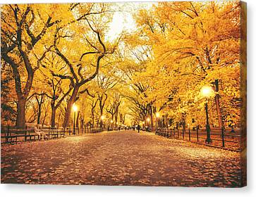 Autumn Canvas Print by Vivienne Gucwa