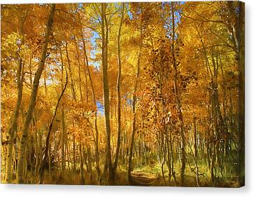 Autumn Walk Among The Aspens Canvas Print by Donna Kennedy