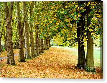 Canvas Print featuring the photograph Autumn Walk by Colin Rayner