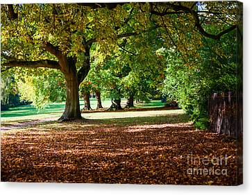 Canvas Print featuring the photograph Autumn Walk In The Park by Colin Rayner