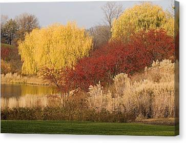 Autumn Willow Trees Canvas Print