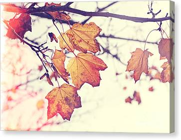 Autumn Wonder - Natalie Kinnear Photography Canvas Print