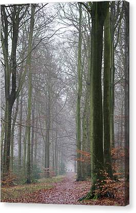 Autumn Woodland Avenue Canvas Print