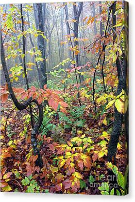 Autumn Woodland Canvas Print by Thomas R Fletcher