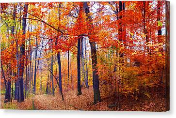 Autumn Woodland Trail Canvas Print by Jessica Jenney