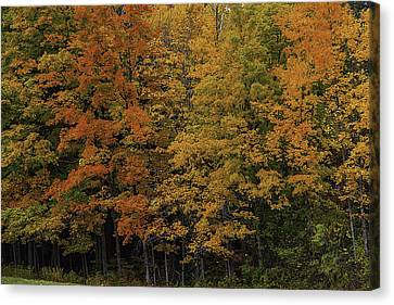 Autumn Woods Canvas Print by Garry Gay