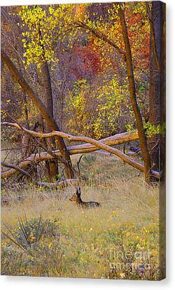 Autumn Yearling Canvas Print by Dennis Hammer