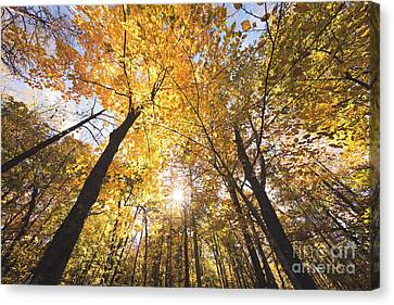 Autumn Yellow Canvas Print by Ernesto Ruiz